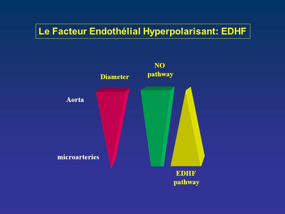 NO pathway EDHF pathway Diameter Aorta microarteries Le Facteur Endothélial Hyperpolarisant: EDHF