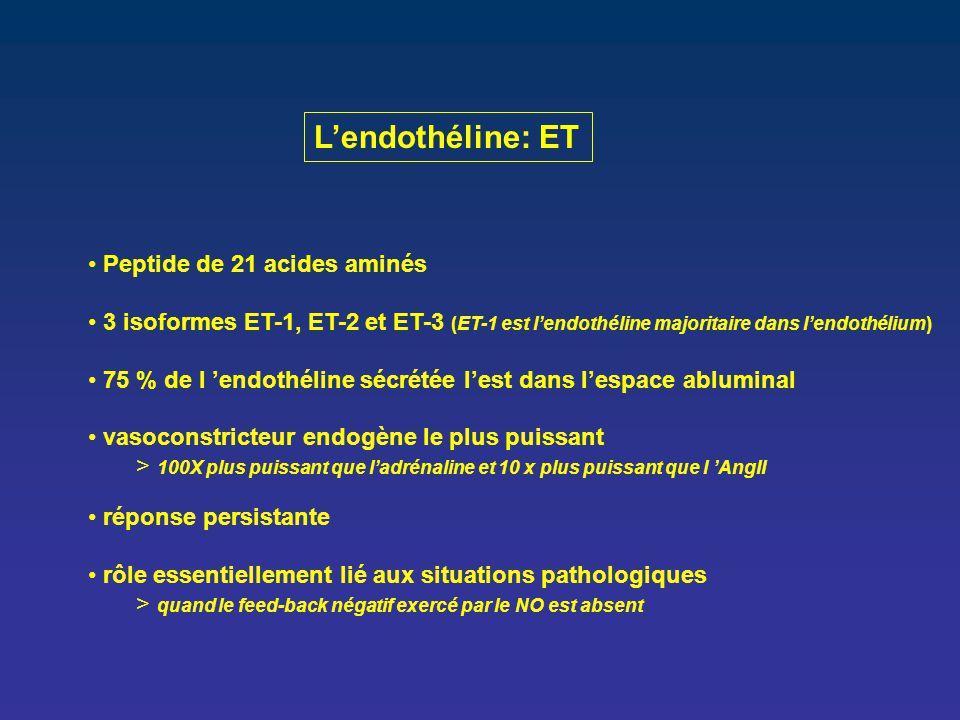 L'endothéline: ET Peptide de 21 acides aminés 3 isoformes ET-1, ET-2 et ET-3 (ET-1 est l'endothéline majoritaire dans l'endothélium) 75 % de l 'endoth