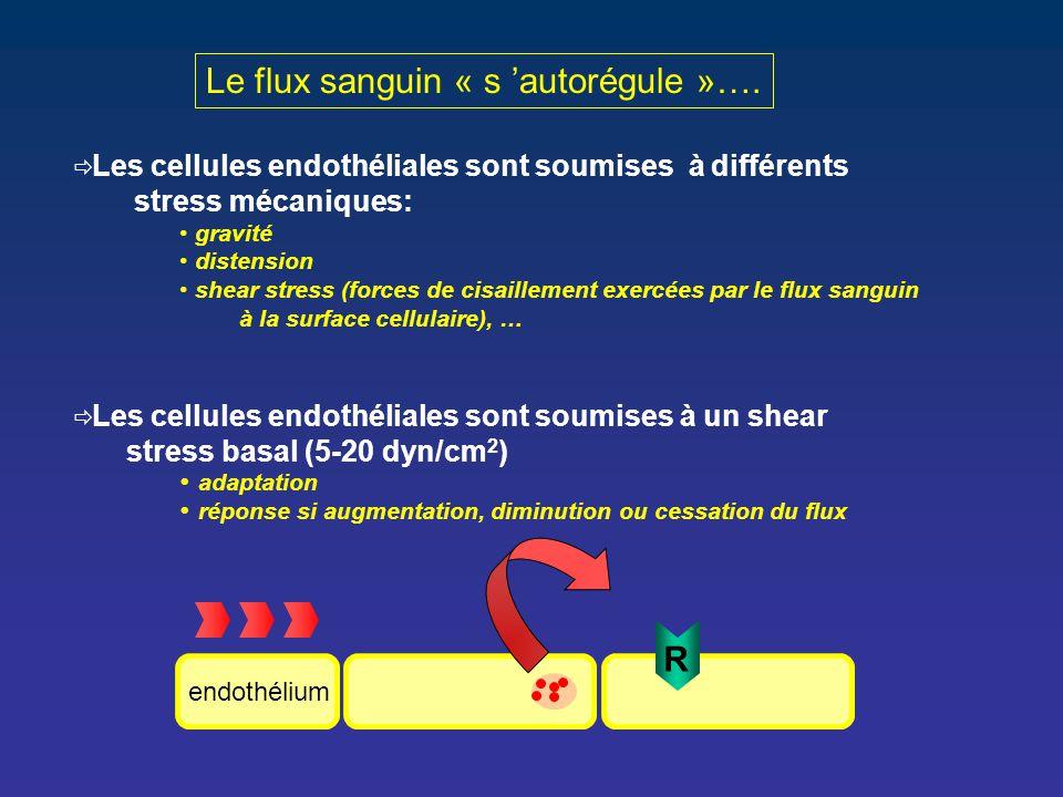 Le flux sanguin « s 'autorégule »….  Les cellules endothéliales sont soumises à différents stress mécaniques: gravité distension shear stress (forces