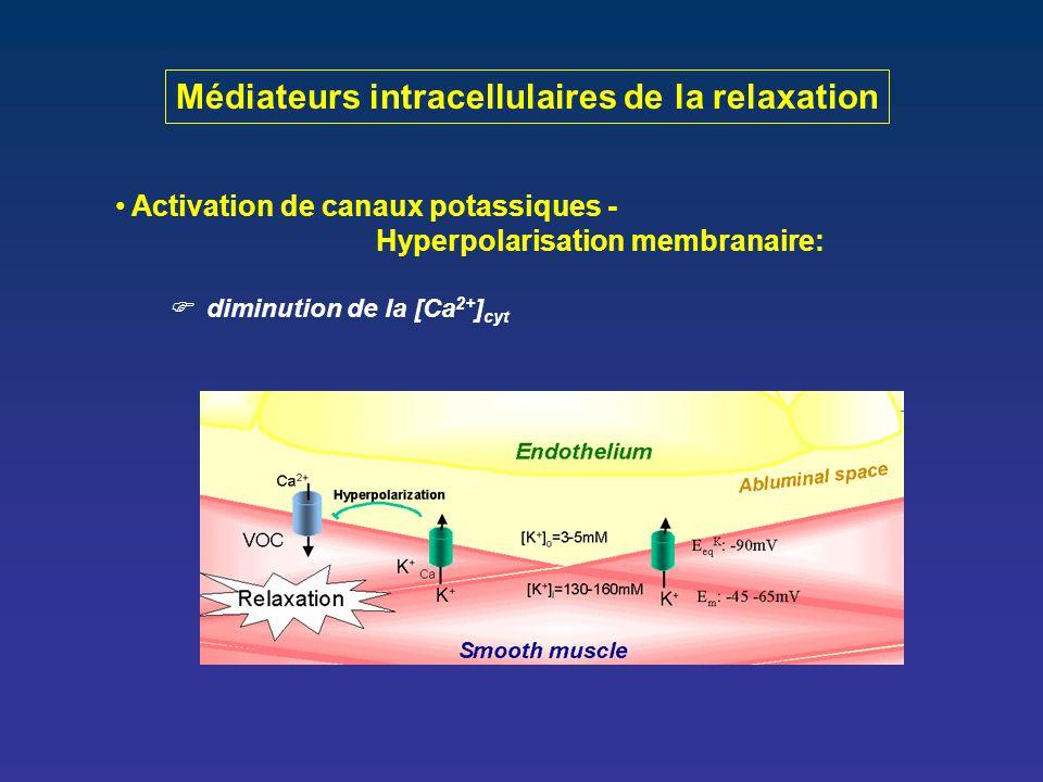 Médiateurs intracellulaires de la relaxation Activation de canaux potassiques - Hyperpolarisation membranaire:  diminution de la [Ca 2+ ] cyt