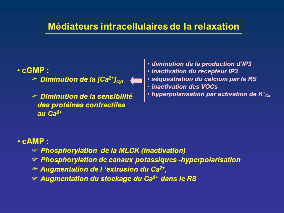 cGMP :  Diminution de la [Ca 2+ ] cyt  Diminution de la sensibilité des protéines contractiles au Ca 2+ Médiateurs intracellulaires de la relaxation