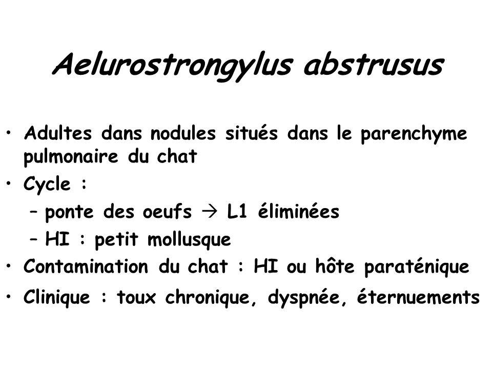 Aelurostrongylus abstrusus Adultes dans nodules situés dans le parenchyme pulmonaire du chat Cycle : –ponte des oeufs  L1 éliminées –HI : petit mollu