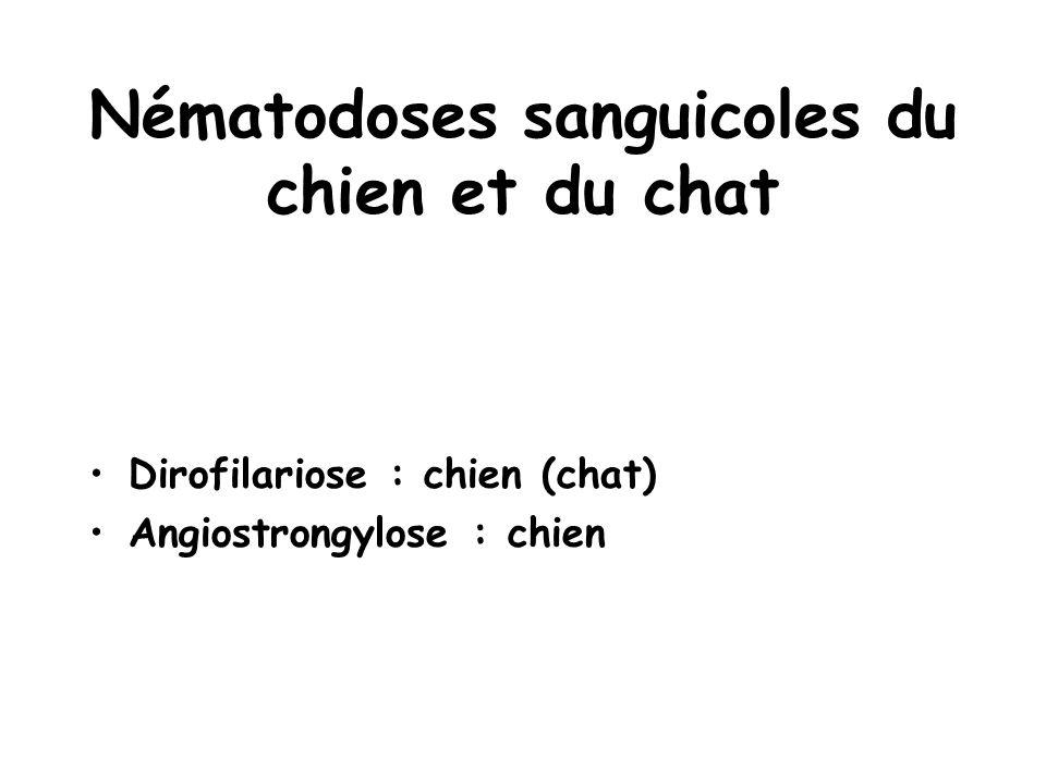 Nématodoses sanguicoles du chien et du chat Dirofilariose : chien (chat) Angiostrongylose : chien