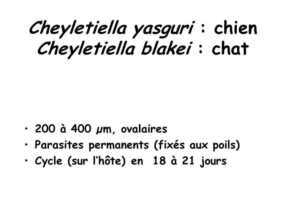 Cheyletiella yasguri : chien Cheyletiella blakei : chat 200 à 400 µm, ovalaires Parasites permanents (fixés aux poils) Cycle (sur l'hôte) en 18 à 21 jours