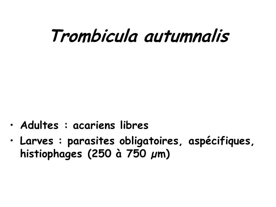 Trombicula autumnalis Adultes : acariens libres Larves : parasites obligatoires, aspécifiques, histiophages (250 à 750 µm)