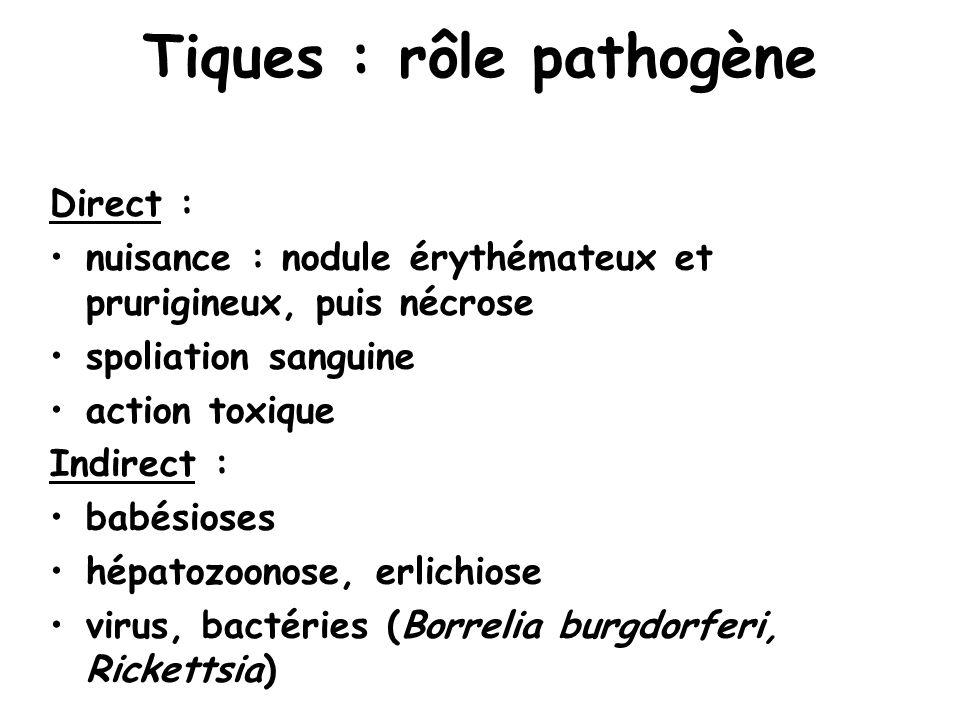 Tiques : rôle pathogène Direct : nuisance : nodule érythémateux et prurigineux, puis nécrose spoliation sanguine action toxique Indirect : babésioses hépatozoonose, erlichiose virus, bactéries (Borrelia burgdorferi, Rickettsia)