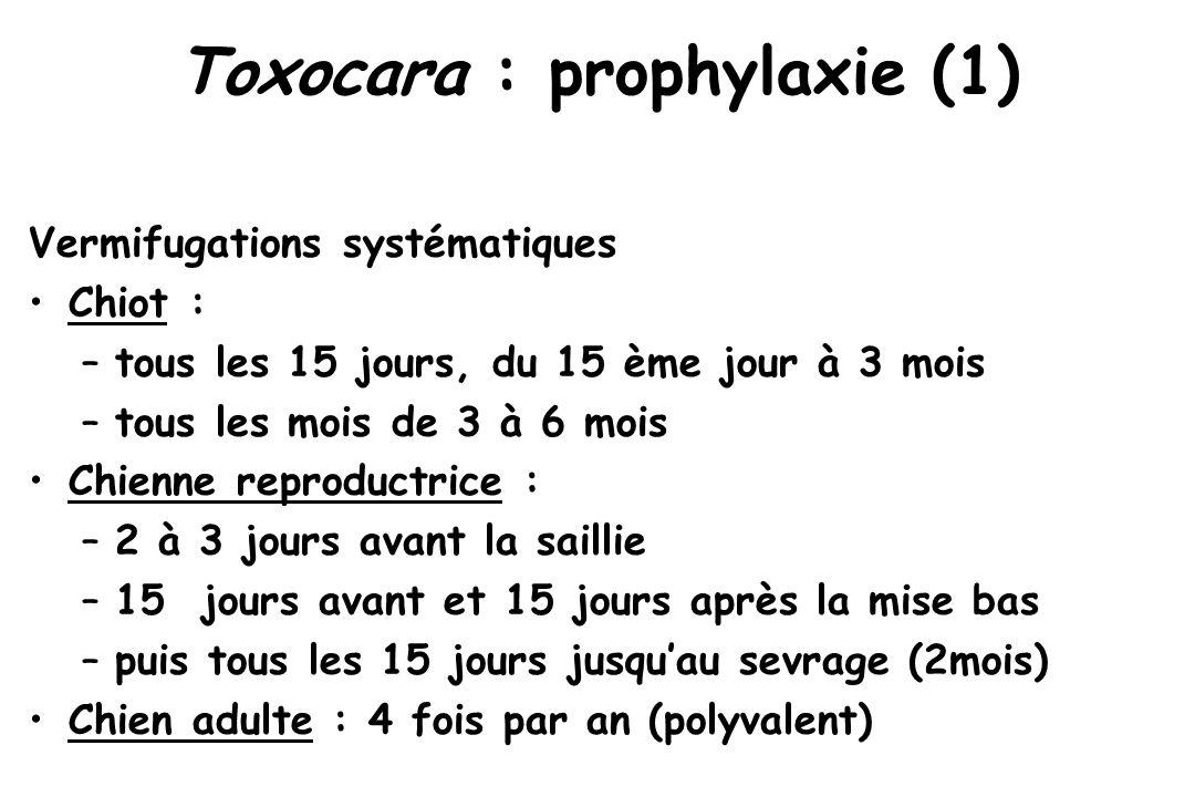 Toxocara : prophylaxie (1) Vermifugations systématiques Chiot : –tous les 15 jours, du 15 ème jour à 3 mois –tous les mois de 3 à 6 mois Chienne repro