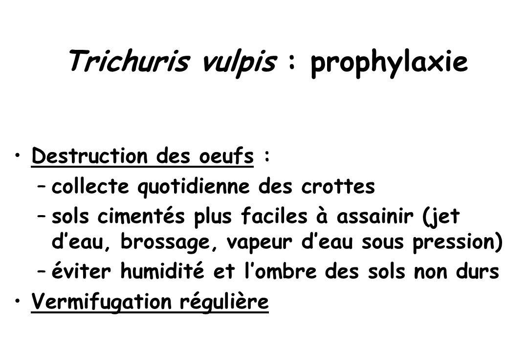 Trichuris vulpis : prophylaxie Destruction des oeufs : –collecte quotidienne des crottes –sols cimentés plus faciles à assainir (jet d'eau, brossage,