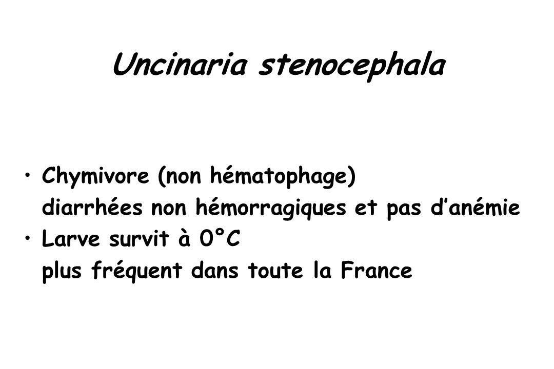 Uncinaria stenocephala Chymivore (non hématophage) diarrhées non hémorragiques et pas d'anémie Larve survit à 0°C plus fréquent dans toute la France