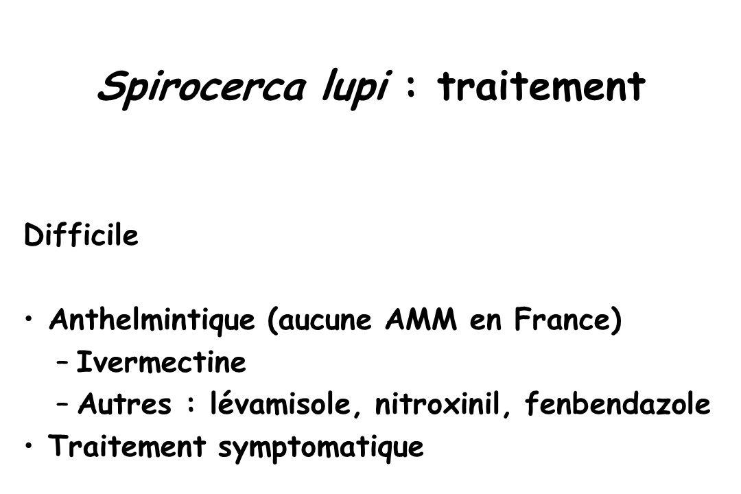 Spirocerca lupi : traitement Difficile Anthelmintique (aucune AMM en France) –Ivermectine –Autres : lévamisole, nitroxinil, fenbendazole Traitement sy
