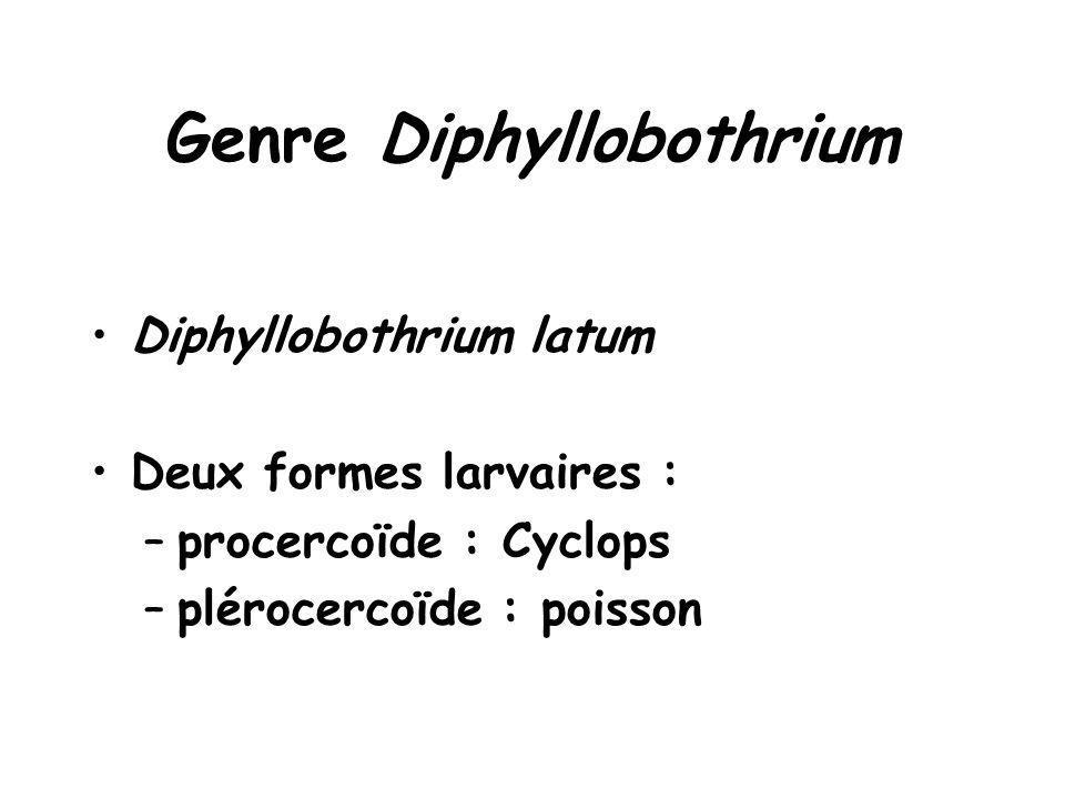 Genre Diphyllobothrium Diphyllobothrium latum Deux formes larvaires : –procercoïde : Cyclops –plérocercoïde : poisson