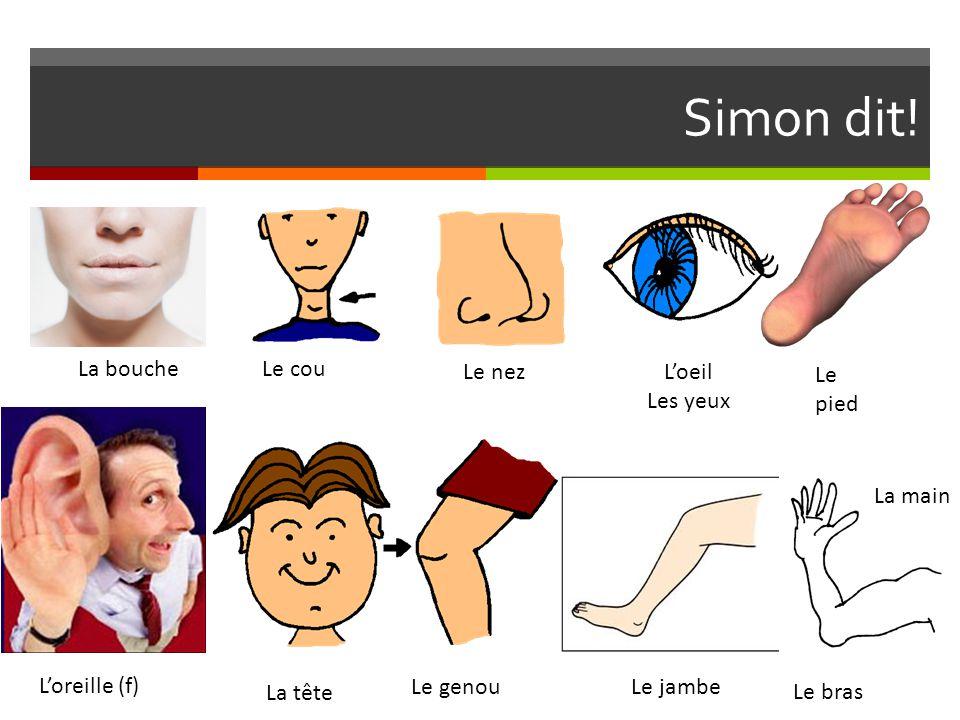 Simon dit! La boucheLe cou Le nezL'oeil Les yeux Le pied L'oreille (f) La tête Le genouLe jambe Le bras La main