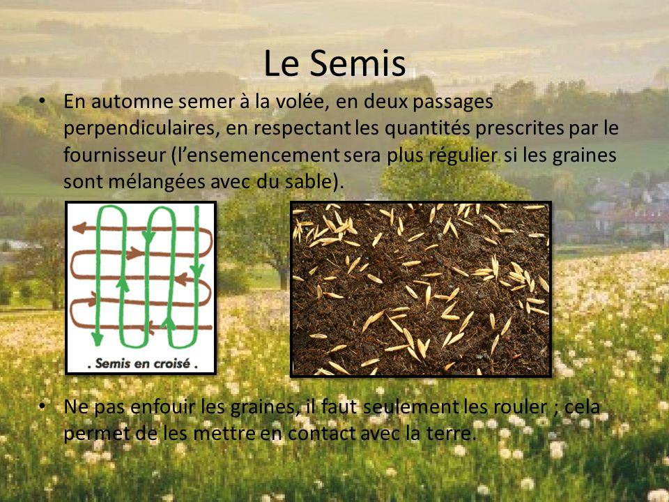 Le Semis En automne semer à la volée, en deux passages perpendiculaires, en respectant les quantités prescrites par le fournisseur (l'ensemencement se