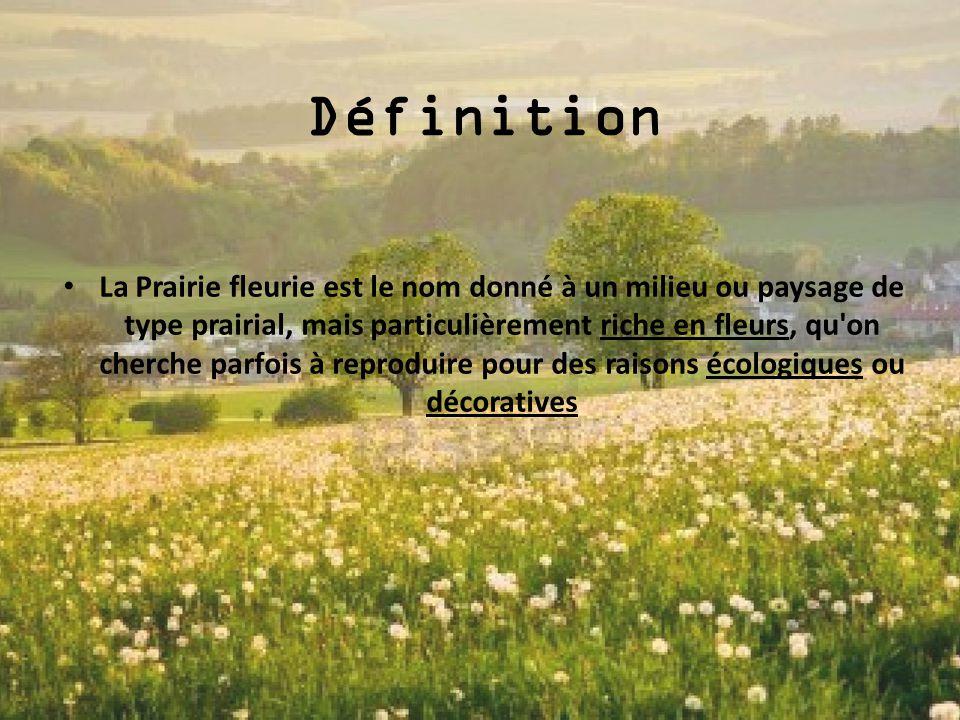 Définition La Prairie fleurie est le nom donné à un milieu ou paysage de type prairial, mais particulièrement riche en fleurs, qu'on cherche parfois à
