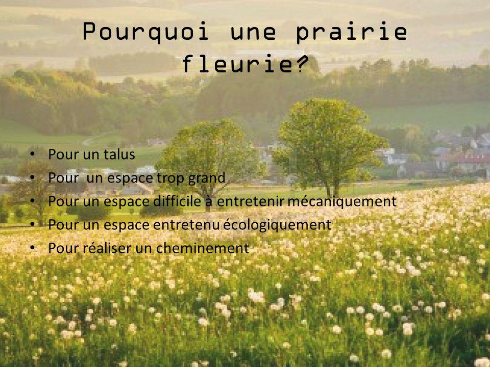 Pourquoi une prairie fleurie? Pour un talus Pour un espace trop grand Pour un espace difficile à entretenir mécaniquement Pour un espace entretenu éco