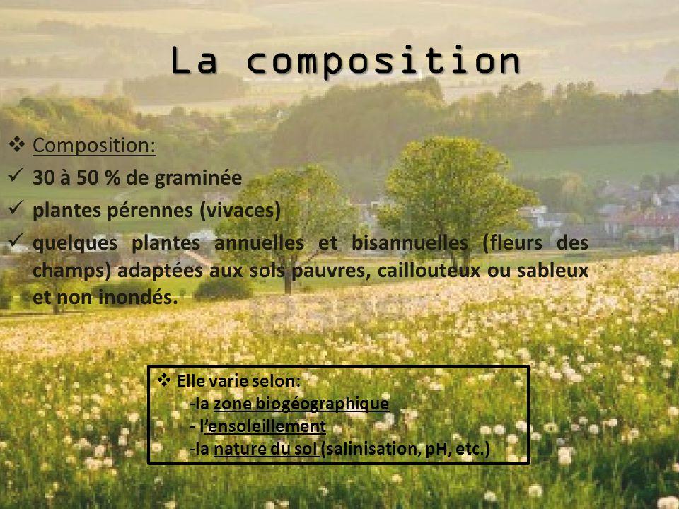 La composition  Composition: 30 à 50 % de graminée plantes pérennes (vivaces) quelques plantes annuelles et bisannuelles (fleurs des champs) adaptées