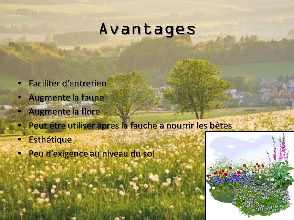 Avantages Faciliter d'entretien Augmente la faune Augmente la flore Peut être utiliser âpres la fauche a nourrir les bêtes Esthétique Peu d'exigence a