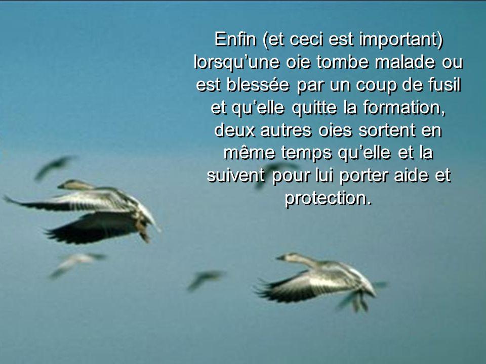 Quels messages nous envoyons lorsque nous crions à l'arrière? Les oies de queue crient pour encourager celles de devant à maintenir leur rapidité.