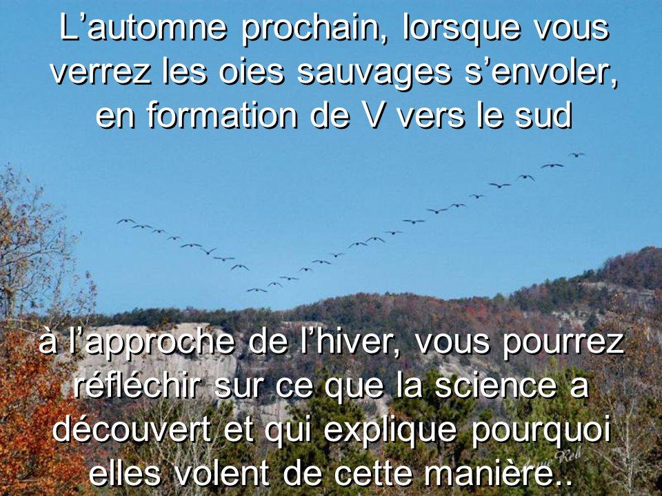 L'automne prochain, lorsque vous verrez les oies sauvages s'envoler, en formation de V vers le sud à l'approche de l'hiver, vous pourrez réfléchir sur ce que la science a découvert et qui explique pourquoi elles volent de cette manière..