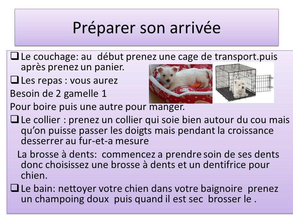 Préparer son arrivée  Le couchage: au début prenez une cage de transport.puis après prenez un panier.