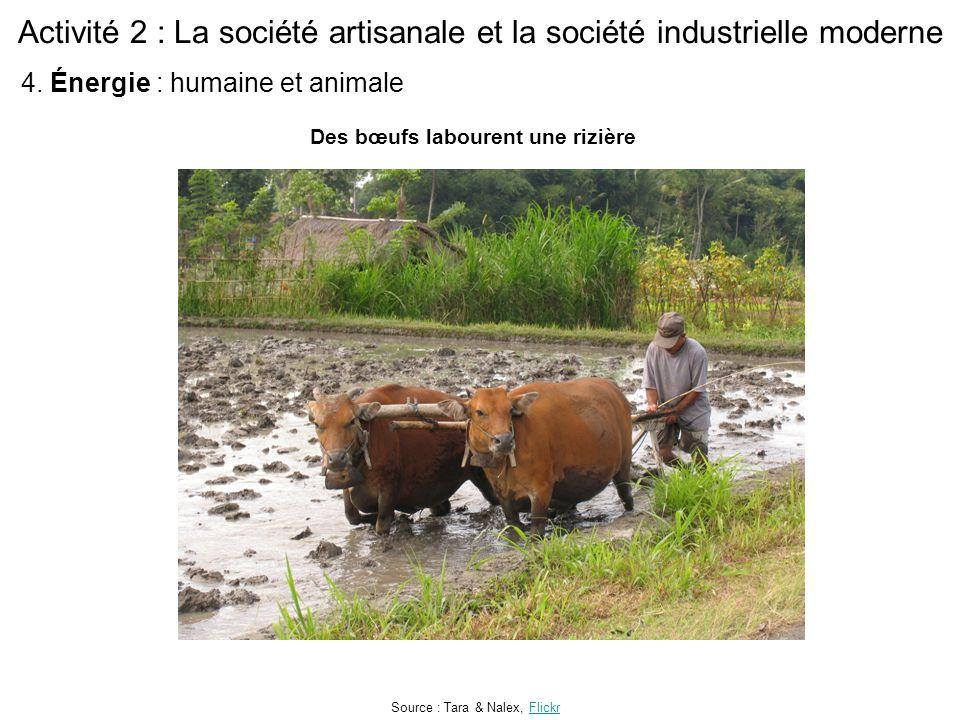 Activité 2 : La société artisanale et la société industrielle moderne Des bœufs labourent une rizière Source : Tara & Nalex, FlickrFlickr 4. Énergie :