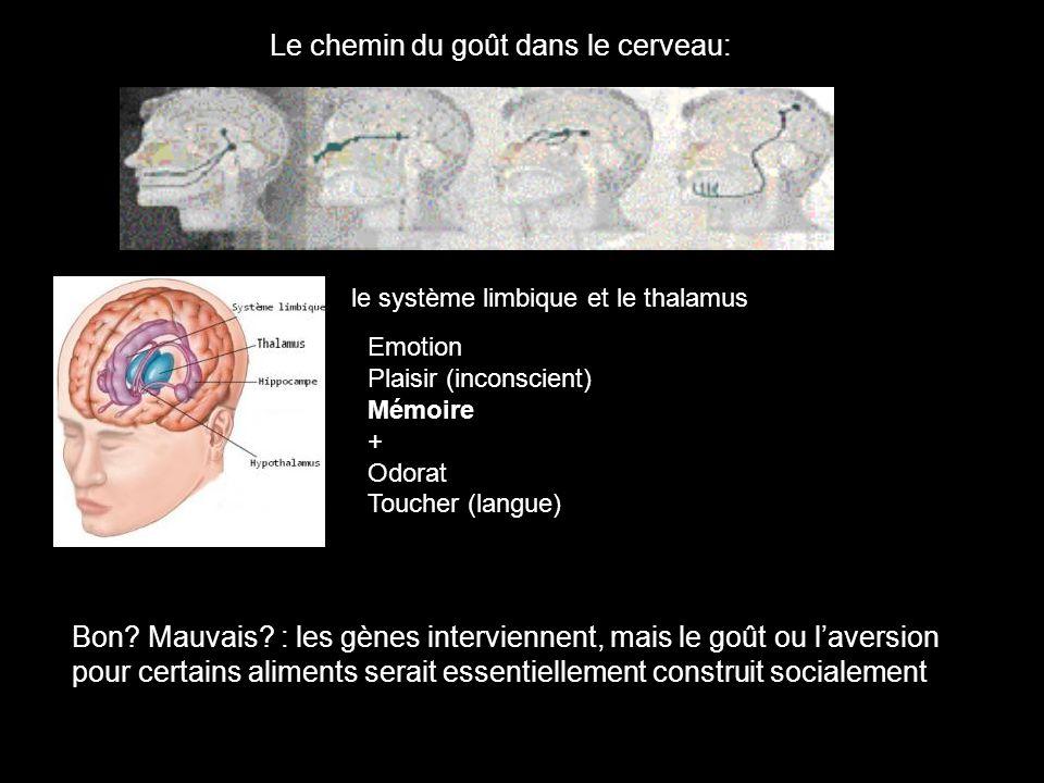 Le chemin du goût dans le cerveau: Emotion Plaisir (inconscient) Mémoire + Odorat Toucher (langue) le système limbique et le thalamus Bon? Mauvais? :