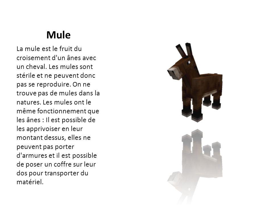 Mule La mule est le fruit du croisement d'un ânes avec un cheval. Les mules sont stérile et ne peuvent donc pas se reproduire. On ne trouve pas de mul