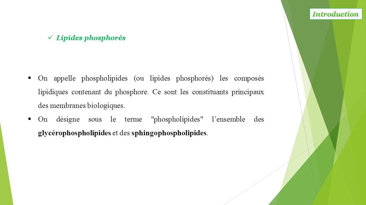 On appelle phospholipides (ou lipides phosphorés) les composés lipidiques contenant du phosphore. Ce sont les constituants principaux des membranes