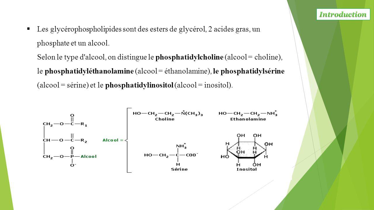  Les glycérophospholipides sont des esters de glycérol, 2 acides gras, un phosphate et un alcool. Selon le type d'alcool, on distingue le phosphatidy