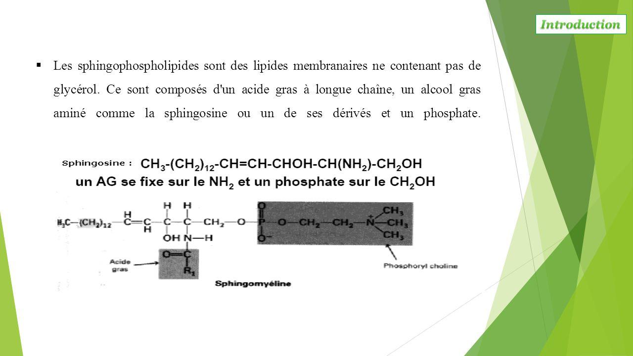  Les sphingophospholipides sont des lipides membranaires ne contenant pas de glycérol. Ce sont composés d'un acide gras à longue chaîne, un alcool gr
