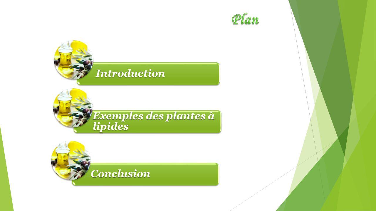 Helianthus annuus (Tournesol) Famille des Composées  Partie de la plante contenant les lipides: les Graines  La teneur en lipides dans les graines des variétés améliorées varie de 40 à 50 %.