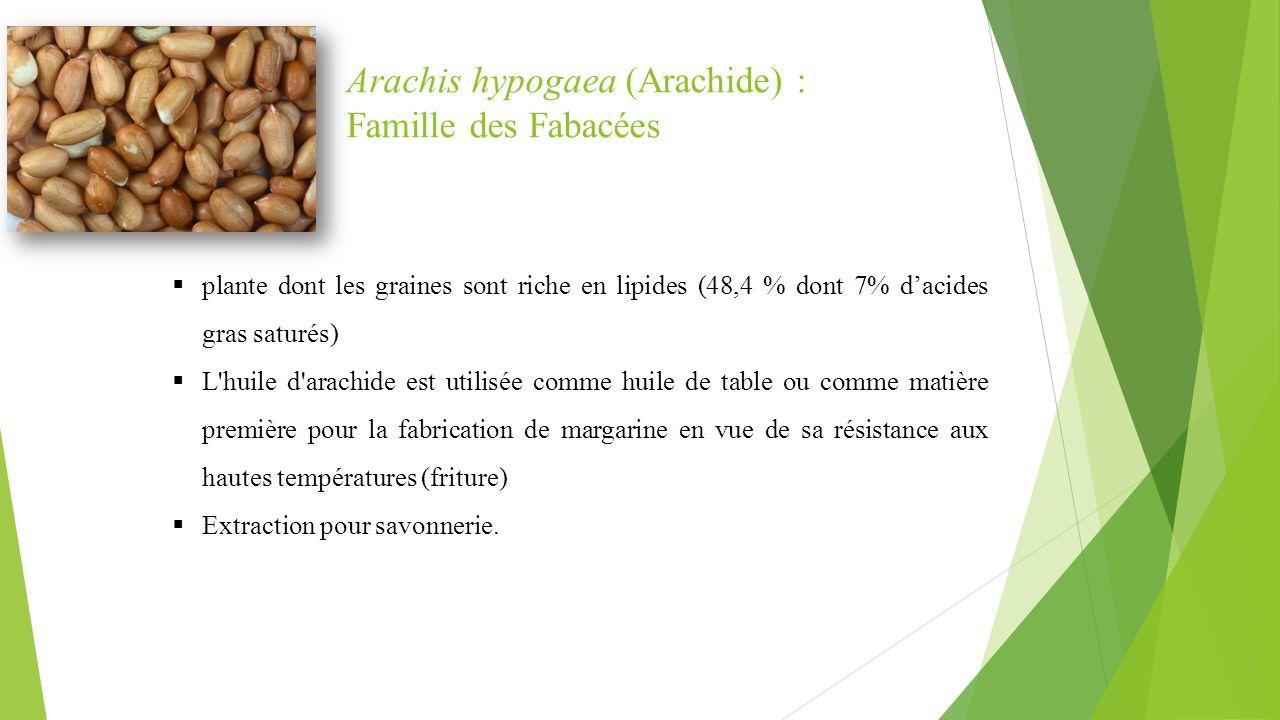Arachis hypogaea (Arachide) : Famille des Fabacées  plante dont les graines sont riche en lipides (48,4 % dont 7% d'acides gras saturés)  L'huile d'