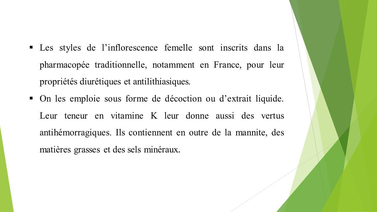  Les styles de l'inflorescence femelle sont inscrits dans la pharmacopée traditionnelle, notamment en France, pour leur propriétés diurétiques et ant