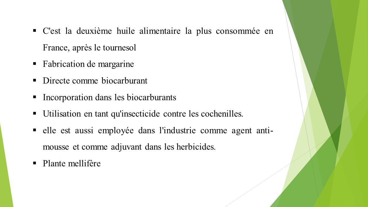  C'est la deuxième huile alimentaire la plus consommée en France, après le tournesol  Fabrication de margarine  Directe comme biocarburant  Incorp