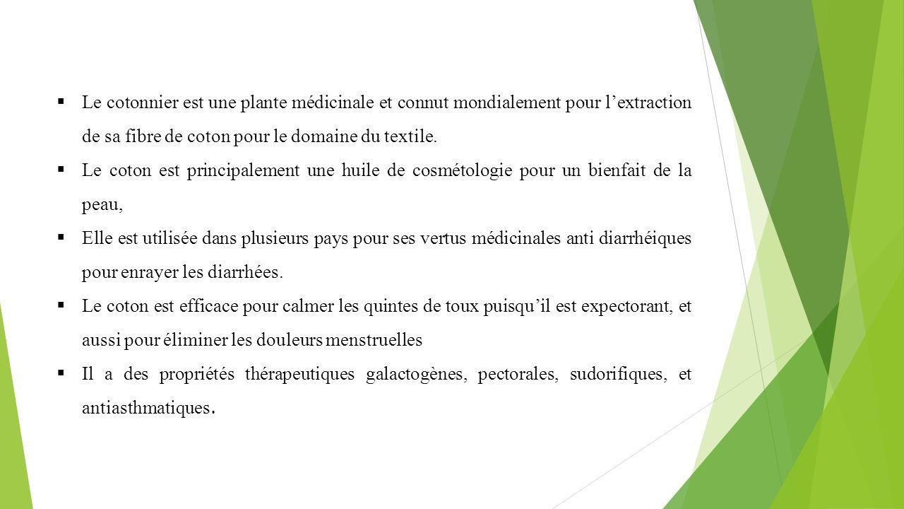  Le cotonnier est une plante médicinale et connut mondialement pour l'extraction de sa fibre de coton pour le domaine du textile.  Le coton est prin