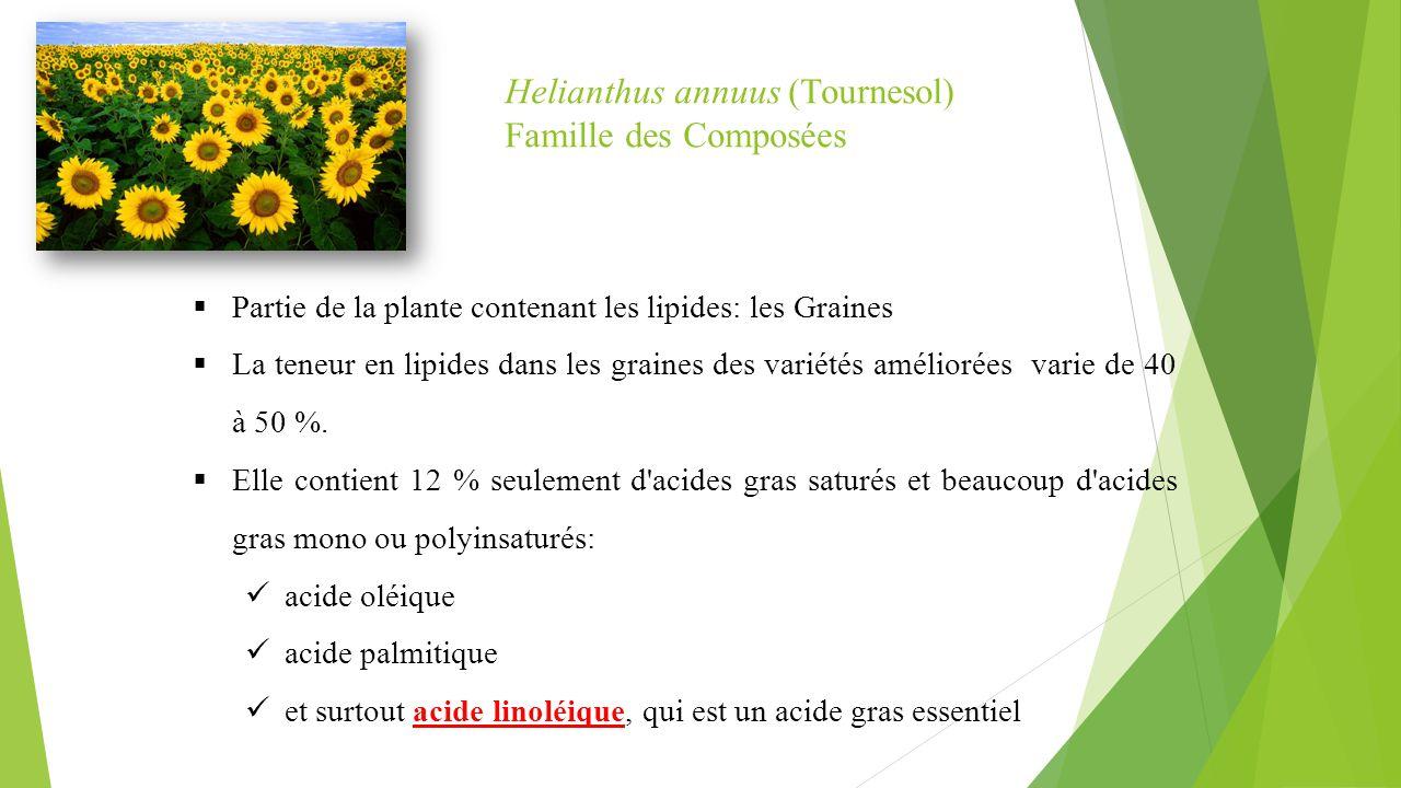 Helianthus annuus (Tournesol) Famille des Composées  Partie de la plante contenant les lipides: les Graines  La teneur en lipides dans les graines d