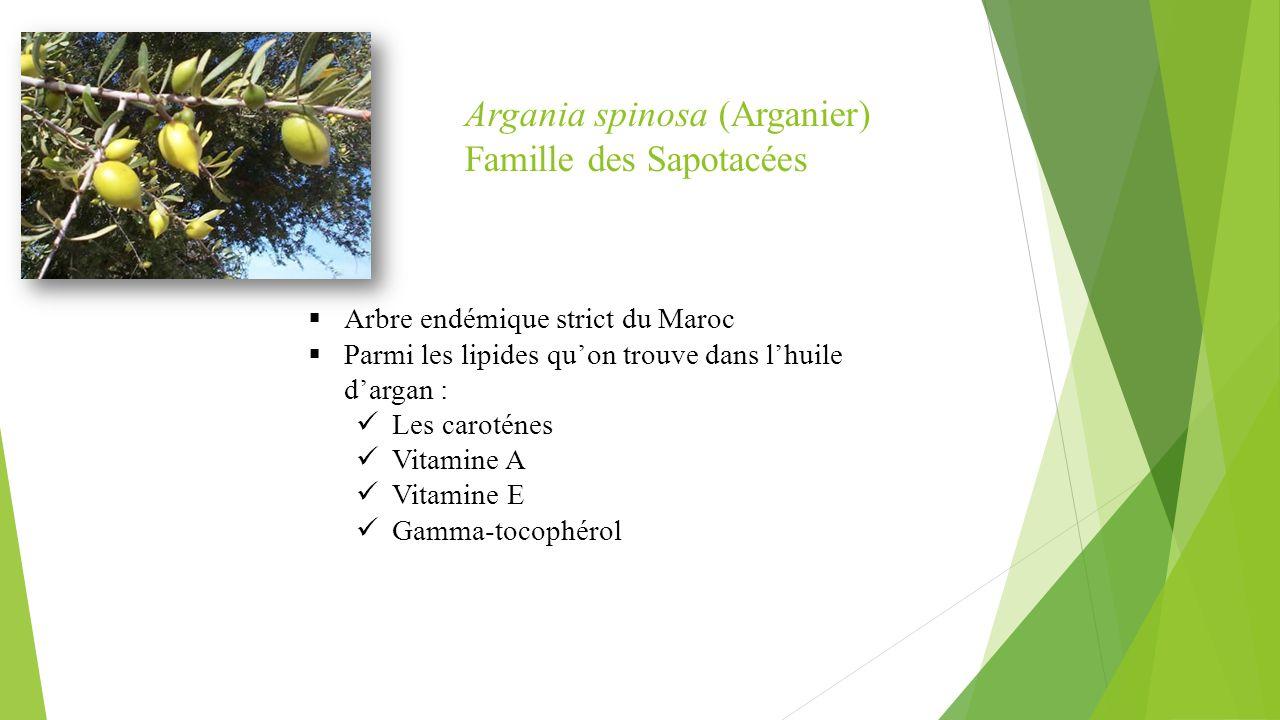 Argania spinosa (Arganier) Famille des Sapotacées  Arbre endémique strict du Maroc  Parmi les lipides qu'on trouve dans l'huile d'argan : Les caroté
