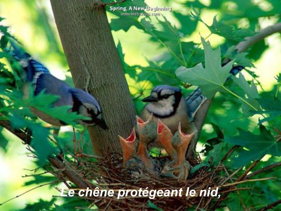 Le chêne protégeant le nid,
