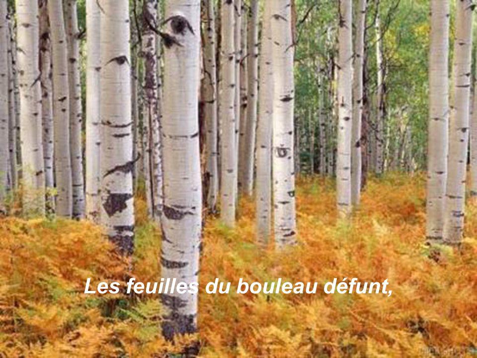 Les feuilles du bouleau défunt,