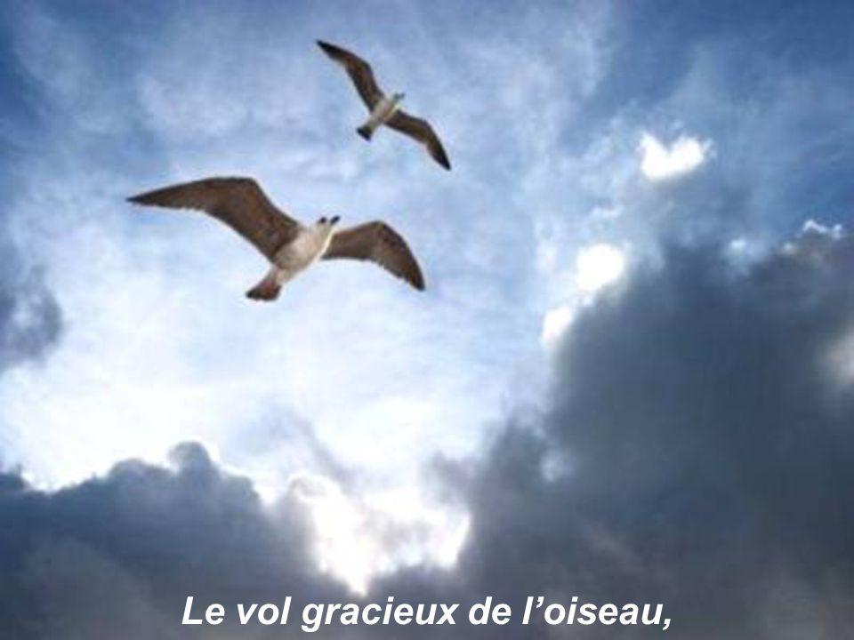 Le vol gracieux de l'oiseau,