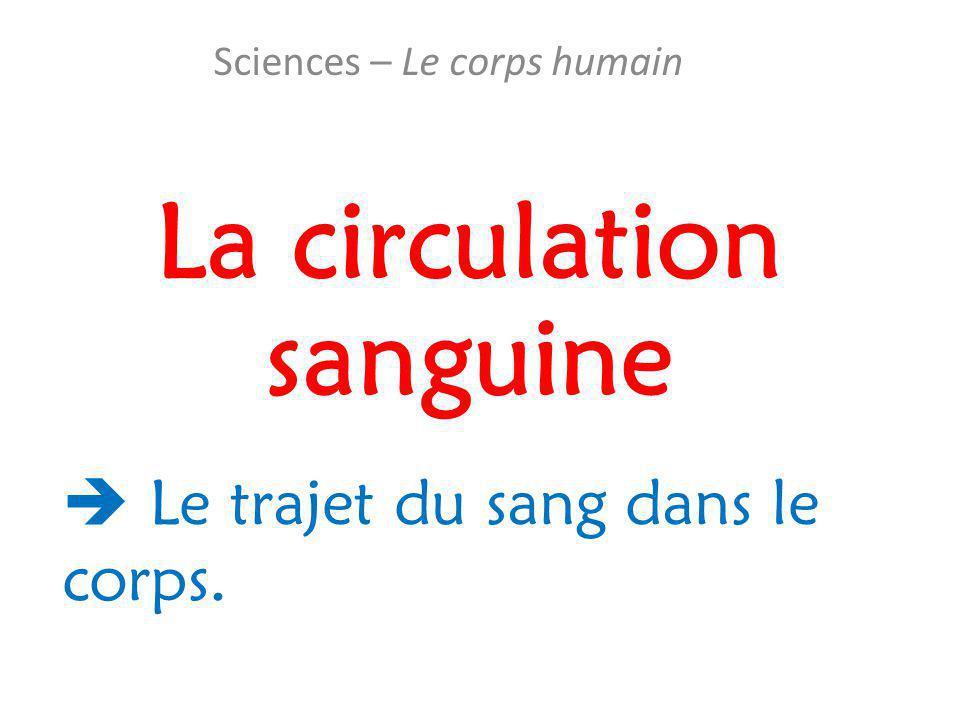 La circulation sanguine Sciences – Le corps humain  Le trajet du sang dans le corps.