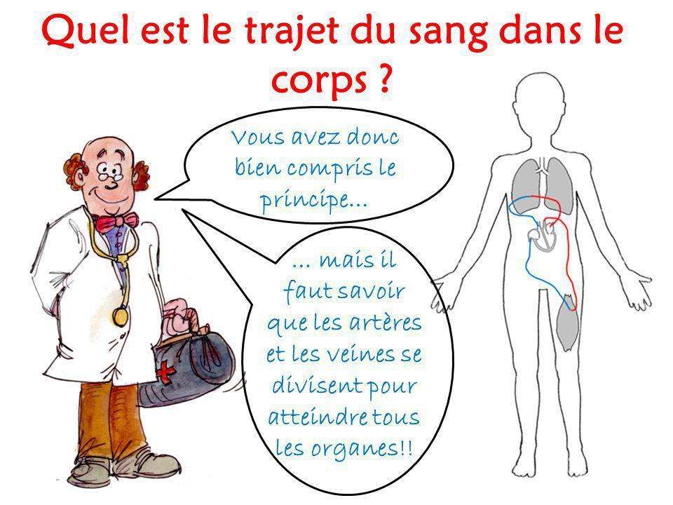 Vous avez donc bien compris le principe… … mais il faut savoir que les artères et les veines se divisent pour atteindre tous les organes!!