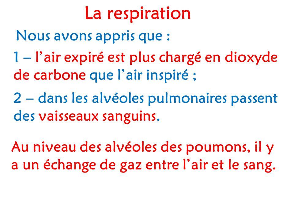 La respiration Nous avons appris que : 1 – l'air expiré est plus chargé en dioxyde de carbone que l'air inspiré ; 2 – dans les alvéoles pulmonaires passent des vaisseaux sanguins.