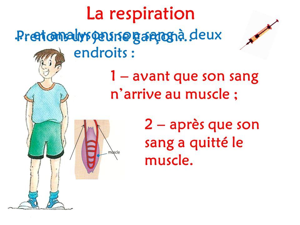 Prenons un jeune garçon… … et analysons son sang à deux endroits : 1 – avant que son sang n'arrive au muscle ; 2 – après que son sang a quitté le muscle.