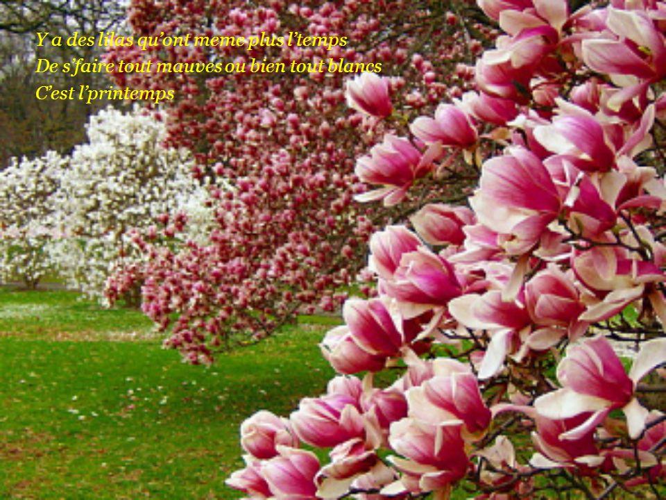Y a la nature qu'est tout en sueur Dans les hectares y a du bonheur C'est l'printemps