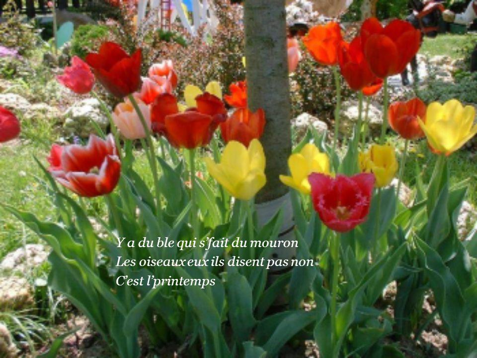 Y a des lilas qu'ont meme plus l'temps De s'faire tout mauves ou bien tout blancs C'est l'printemps