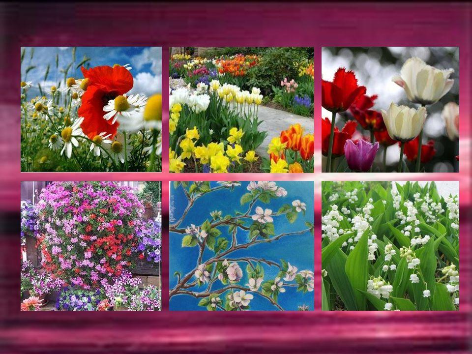 MAI La douceur de Mai fait chanter la beauté des fleurs qui s'épanouissent frêles comme des papillons