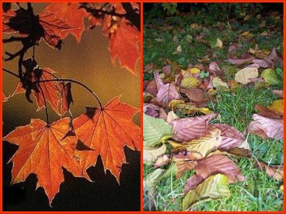 OCTOBRE Avant le long sommeil de l'hiver, la nature nous offre le merveilleux spectacle de ses flamboyantes couleurs