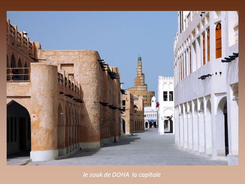 a proximité des immeubles modernes, les chameaux de DOHA