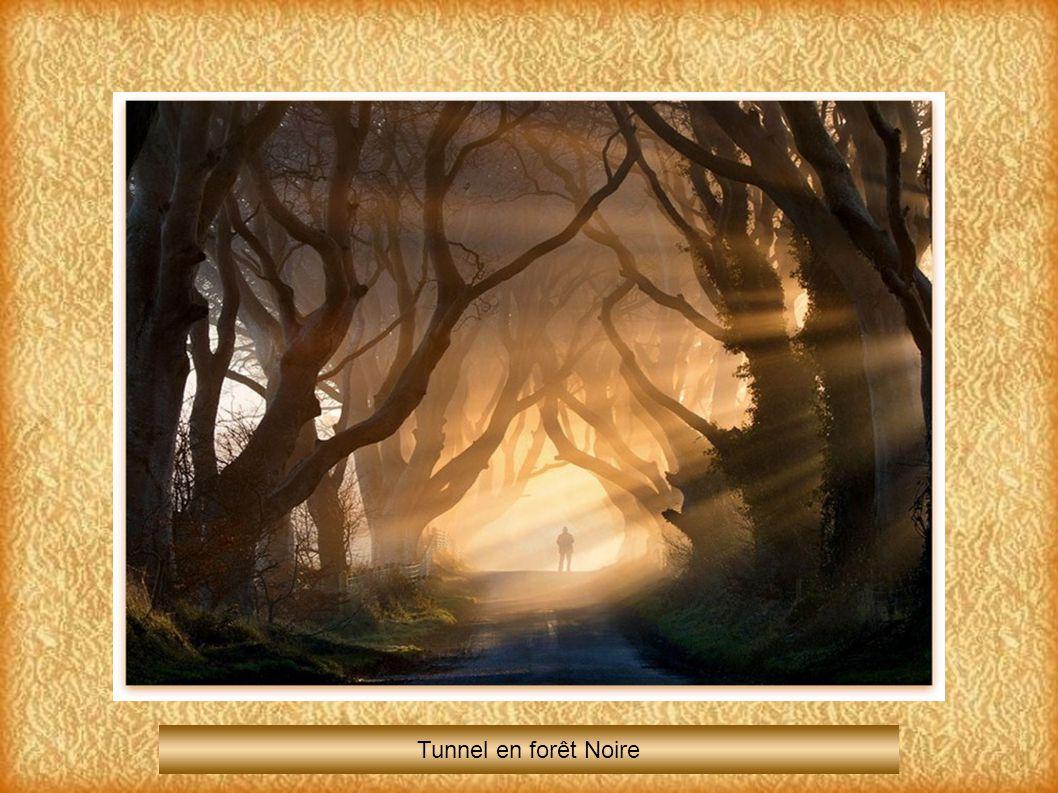 Tunnel en forêt Noire